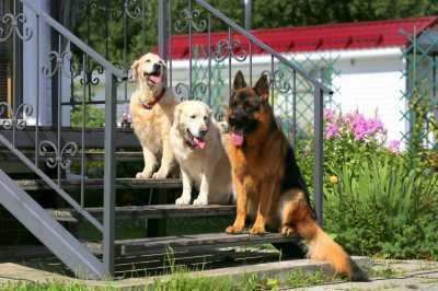 Зоосалон для собак