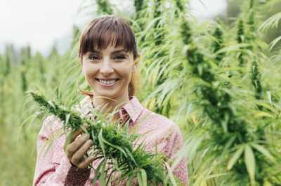 Полезные свойства лечебной марихуаны